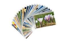 Revelação de 40 fotos 10x15 - R$ 1,99