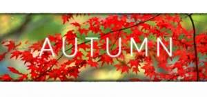 [Gleam] Autumn grátis (ativa na Steam)
