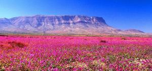 Voos: Deserto do Atacama, com várias opções de saída, a partir de R$1.018, ida e volta, com taxas incluídas!