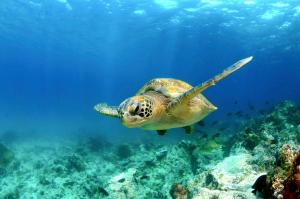 Voos: Ilhas Galápagos, a partir de R$1.774, ida e volta, com taxas incluídas!