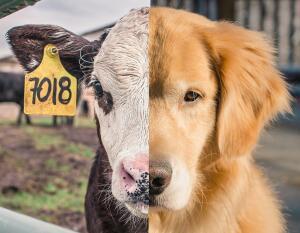 [EaD] ONG Animal e UFSC - Curso gratuito sobre consideração moral dos animais